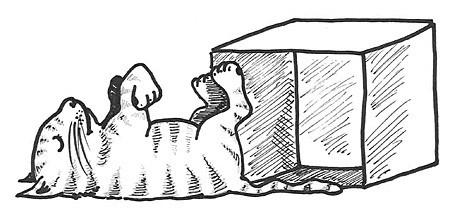 Watching Schrödinger's Cat Die