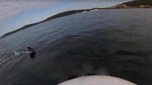 Kayaker Films Heart-Stopping Moment A Massive Shark Circles His Boat