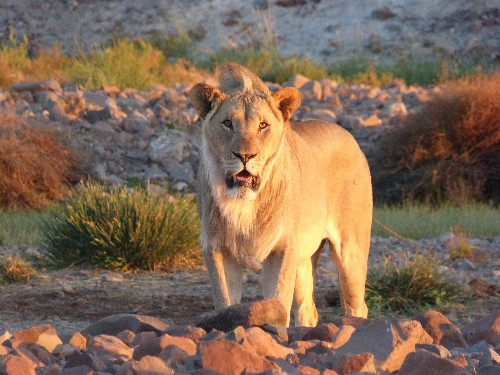Namibia: Raw and Wild