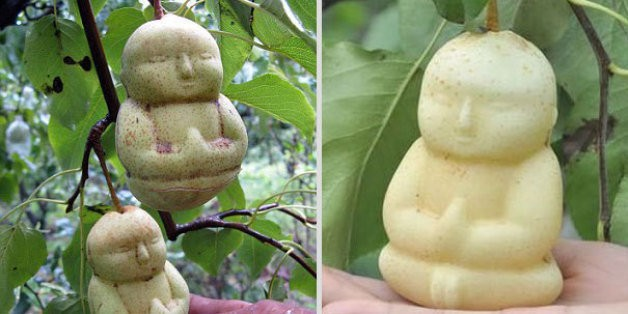 Fruit-Growing Genius Shapes Pears Into Tiny Buddhas | HuffPost Life