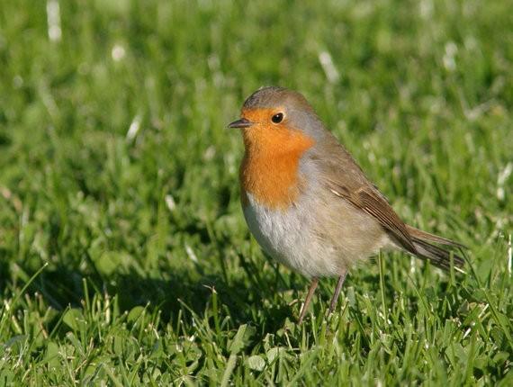 渡り鳥を惑わす電磁ノイズ