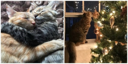 These Inseparable Kittens Are The Christmas Cheer We All Need This Year