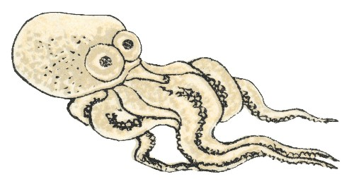 What is it like to be an Octopus?