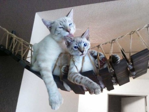 This Couple Builds Cat Furniture That's Nicer Than Everything You Own | HuffPost Life