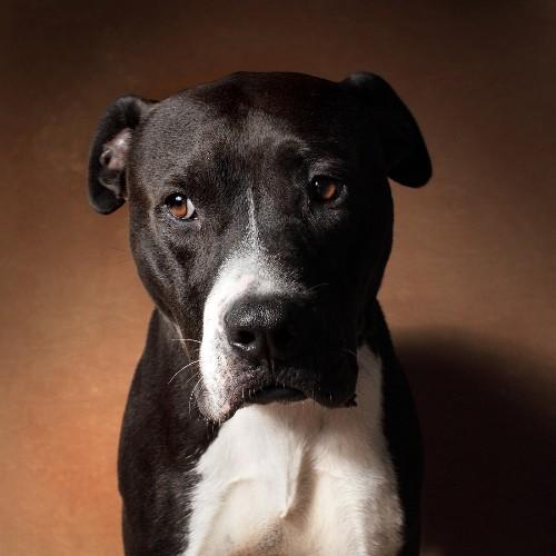 Vincent Flouret and the Gorgeous Dogs of LA Animal Services
