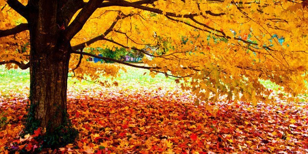 This Year's Most Popular Destinations for Fall | HuffPost Life