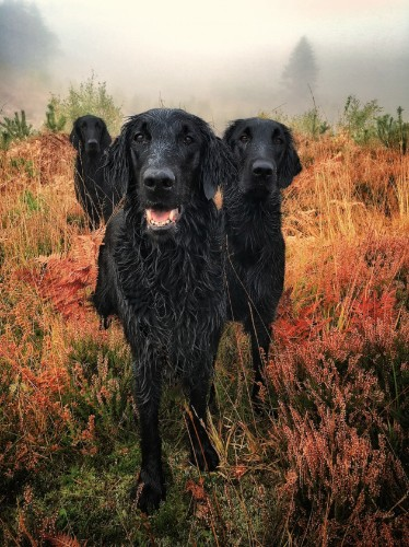 These Adorable 'Dog Photographer Of The Year' Pictures Will Brighten Your Day