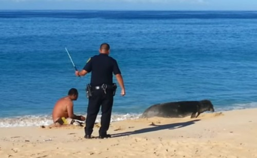 Watch This Hawaii Cop Beat A Man Harassing An Endangered Seal