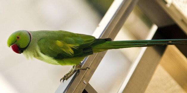 Talking Parakeet Tells Cops Owner Is 'Drunk'