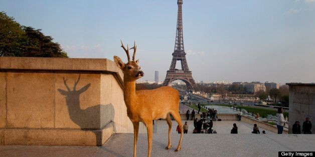 Deer Photographed Sightseeing In Paris (PHOTOS) | HuffPost Life