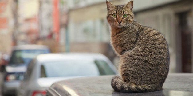 """The Ultimate """"City of Cats"""" (PHOTOS) 