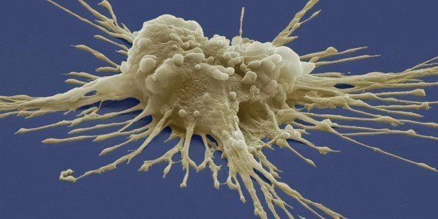 Scientists Clone Stem Cells From Two Adult Men In Major Breakthrough