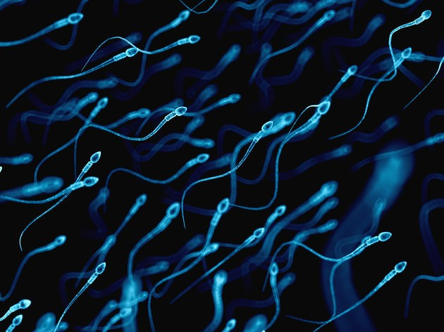 Scientists Have Finally Solved The Mystery Of How Sperm Swim