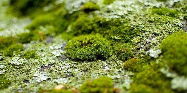Algae. The Surprising Key to Saving Humanity?