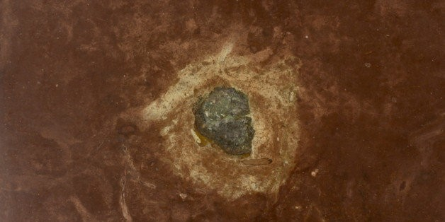 Rare Fossil 'Mona Lisa' Meteorites May Be Evidence Of Ancient Cosmic Collision