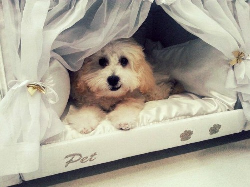 Inside This Bed Is An Even Littler Bed For Your Pet To Sleep In