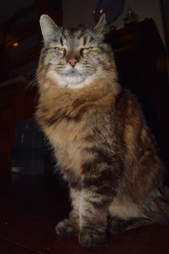 Corduroy Regains World's Oldest Cat Title