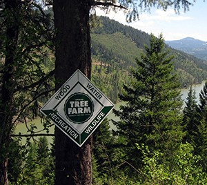 A Win for Forest Conservation: US Green Building Council to recognize ATFS