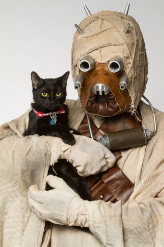 When Star Wars Villains And Shelter Animals Come Together, It's A Force That Can't Be Beat