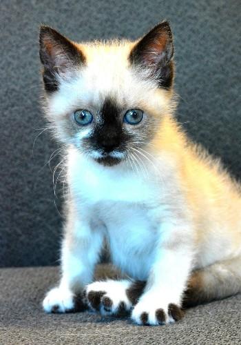 How Tanzy the Paraplegic Kitten Surprised Everyone