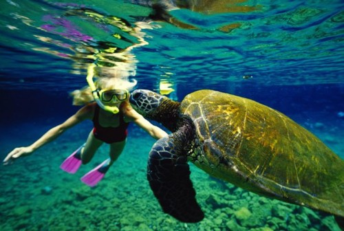16 Of The Worst Things You Can Do In Hawaii | HuffPost Life