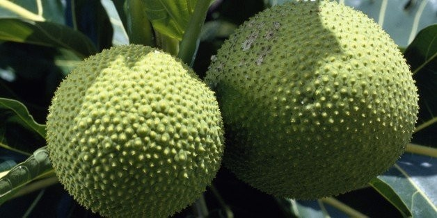 Breadfruit: The Next Superfood To End World Hunger?