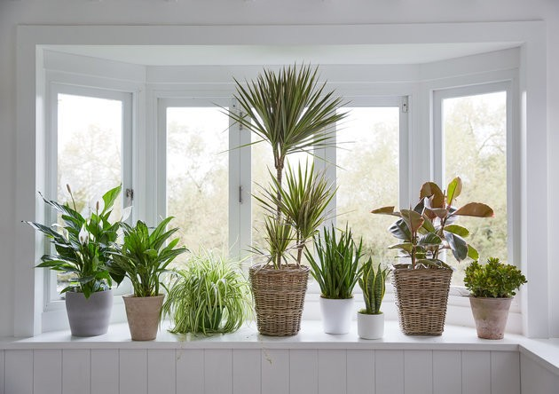 House Plants Could Be The Perfect Antidote To Dry Winter Skin