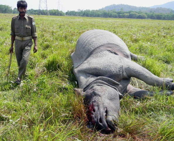 Drones Guard Against Rhino Poaching In India