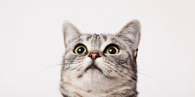 Your Cat Probably Thinks You're A Cat Too, Says Scientist