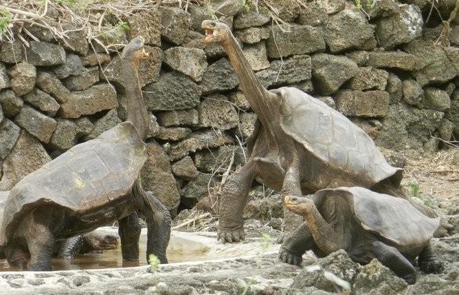 We've Rediscovered 'Extinct' Giant Tortoises