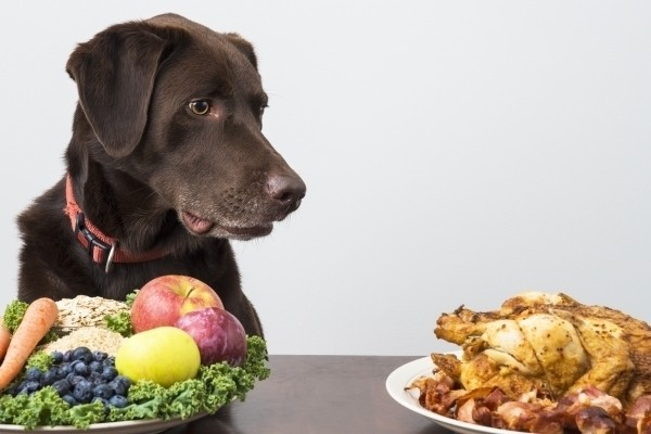 Dog Food: Does Your Pet Food Have These Fillers?