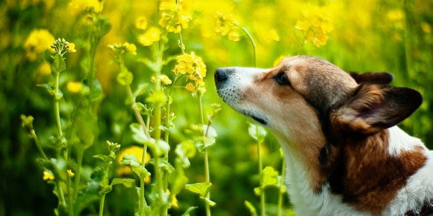 10 Animals Who Remind Us To Stop And Smell The Roses | HuffPost Life