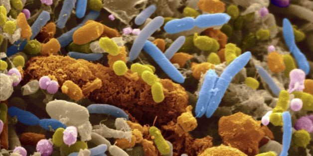 The Surprising Link Between Gut Bacteria And Anxiety