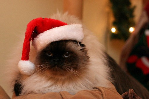 Dear Santa: A Letter From the Cat