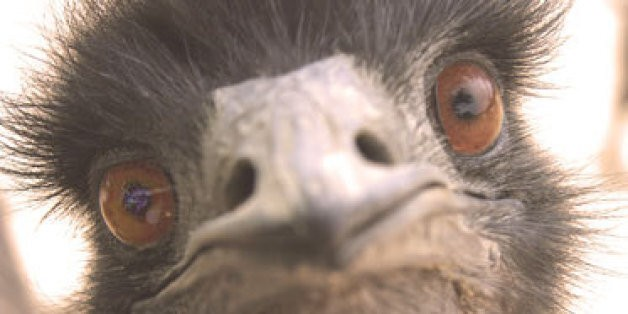 Someone Shot Mary The Emu, And This Animal Rescue Wants Justice