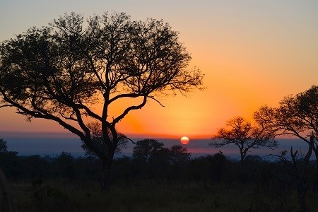 Planning the Ultimate South African Honeymoon Safari