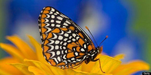 GPS Guide: Mesmerizing Butterfly Wings