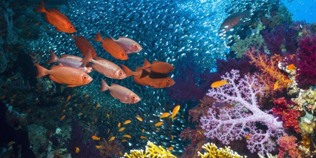 Animal Reef-Building May Have Evolved Way Earlier Than Scientists Thought