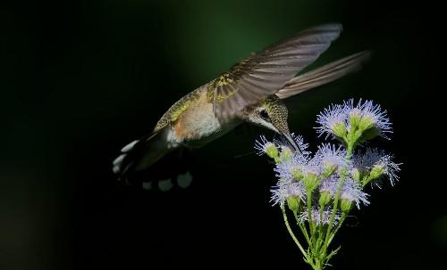 Grow Native Plants: Help birds and eliminate fall garden chores