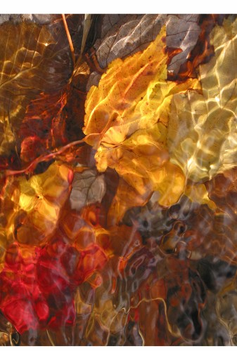 Elements of Autumn: Five Phases of Wearable Art, in Harmony