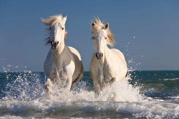 27 Stock Photos Of Horses That Will Restore Your Faith In Horses