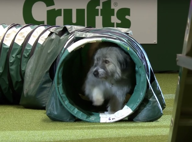 5 Cute Animals To End The Week: Dog Hiding In Tunnel At Crufts Is A Big Brexit Mood