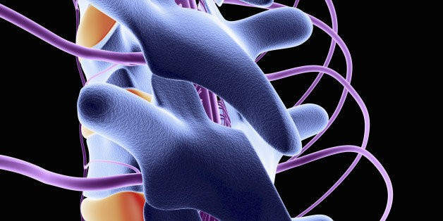New Therapies Could Fix Spinal Cord Damage   HuffPost Life