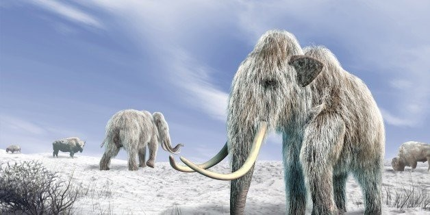 Dogs Helped Drive Mammoths To Their Graves, New Study Suggests