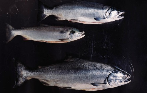 Here's How To Choose The Healthiest Seafood