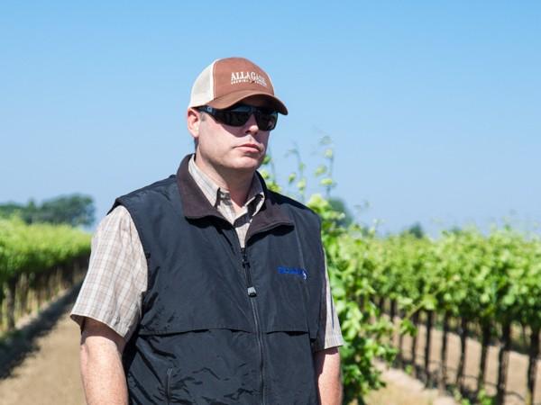 Organic Wine vs. Sustainable Wine