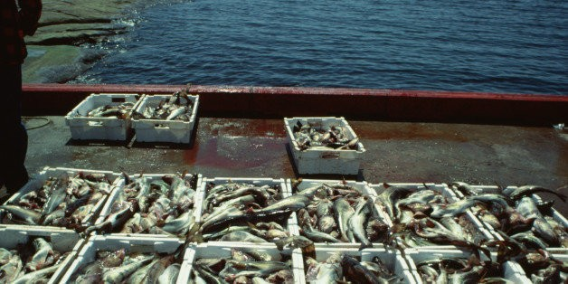 Matter of Scale: A Plan for Sustainable Fisheries