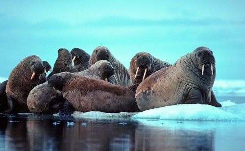This Week In Science: Walruses Invade, Cyanide Clouds, and a Surprising Discovery on the Moon