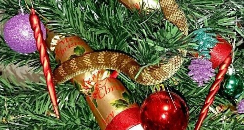 Deadly Snake Hides In Christmas Tree Just Like A Decoration