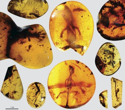 Lizard Found Preserved In Amber Is 99-Million-Years-Old, Scientists Say
